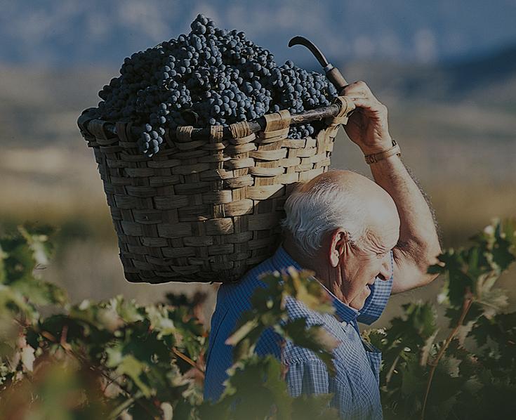O španělském víně